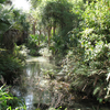 Juniper Springs In The Ocala National Forest