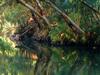 Jordan  River  Bushy