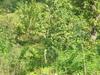 Jungle Around Gajedi Taal