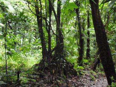 Dominican Jungle
