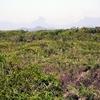 Sandbank Vegetation