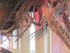 Fossil Specimen Of Mosasaur