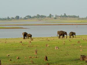 Kabini Reservoir