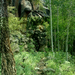 Kachina Trail Descends Immense Lava Flow