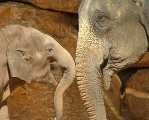Kaundilya Wildlife