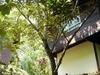 Kawang Forest Reserve