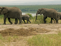 3 - Day Game Drive And Boat Cruise With Chimpanzee Tracking