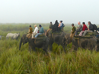 Assam Wildlife Tours 4 Days