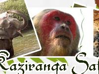 Kaziranga Safari