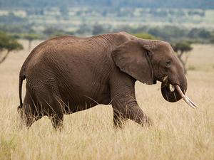 Kenya Family Budget Adventure Safari Photos