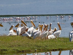 1 Day Lake Nakuru National Park Safari Photos