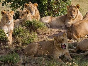 Senior Citizen Kenya Safari Fotos
