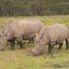 Kenya's Best Safari