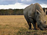 Memories of Kenya Safari