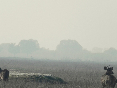 Keoladeo Ghana National Park, Bharatpur