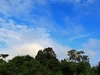 Kerumutan Forest Reserve
