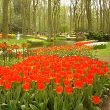 Tulip Flowers At The Keukenhof Garden