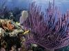 Key Largo Colorful Coral - Fl
