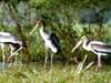 Khangchendzonga National Park - Bird Life