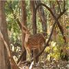 Kheoni Santuario de Vida Silvestre