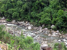 Khe Ro Primitive Forest