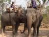 Khong Island Laos