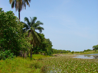 Kiang West National Park