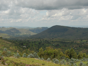 Kibira Safari Package Photos