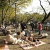 Kichijoji Inokashira Onshi Park