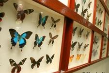 Kipandi Butterfly Park - Sabah