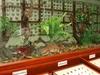 Kipandi Butterfly Park
