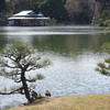Kiyosumi Garden: The Pond And Tea House