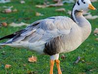 Koonthankulam Bird Sanctury