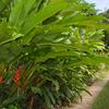 Kot Man-Ya Exotic Flower Garden