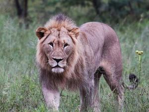 Masai Mara - Luxury Accommodation by a Hippo Pool Fotos