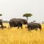 Maasai Mara - Elephant Family
