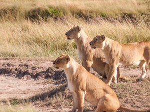 4 Days Budget Masai Mara tour Photos