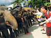 Kuala Gandah Elephant Orphanage Sanctuary - View