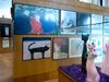 Kuching North City Hall - Cat Museum