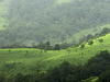 Kudremukh National Park - Grasslands