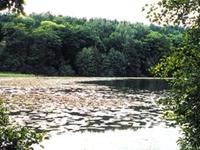 Kuźnik Santuario de la Naturaleza