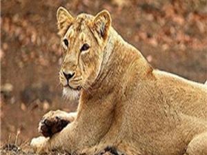 Kuno-Palpur Santuario de Vida Silvestre