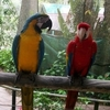 Kuranda Birdworld