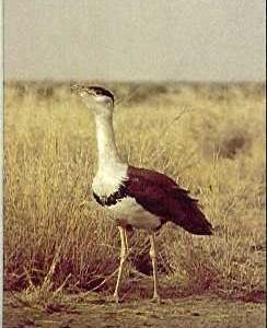 Kutch Great Indian Bustard Sanctuary