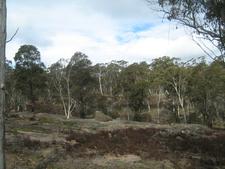Forest Near Boyd River
