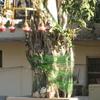Exterior Of Gurdwara