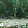Keeriparai Forest Stream