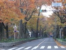Keyaki Namiki N Cross Autumn
