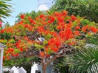 Key West Faro