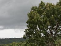Okomu Parque Nacional